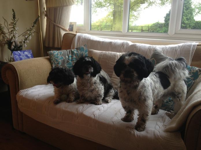 Dolly, Ozzie and Bo, UK